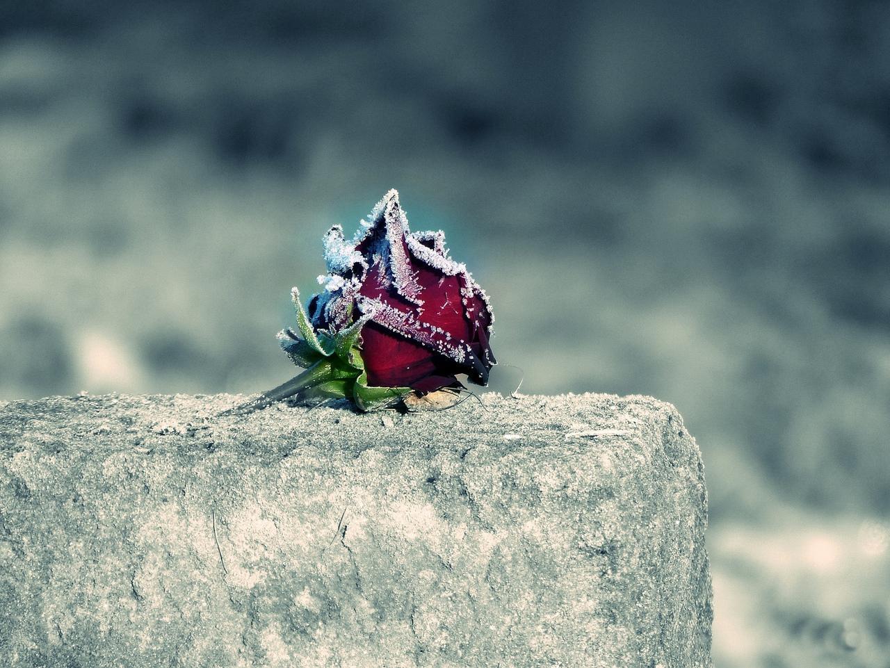 Ruhezeiten für Gräber laufen ab