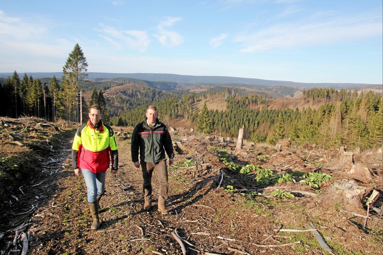 Forstamt will 250.000 Bäume pflanzen