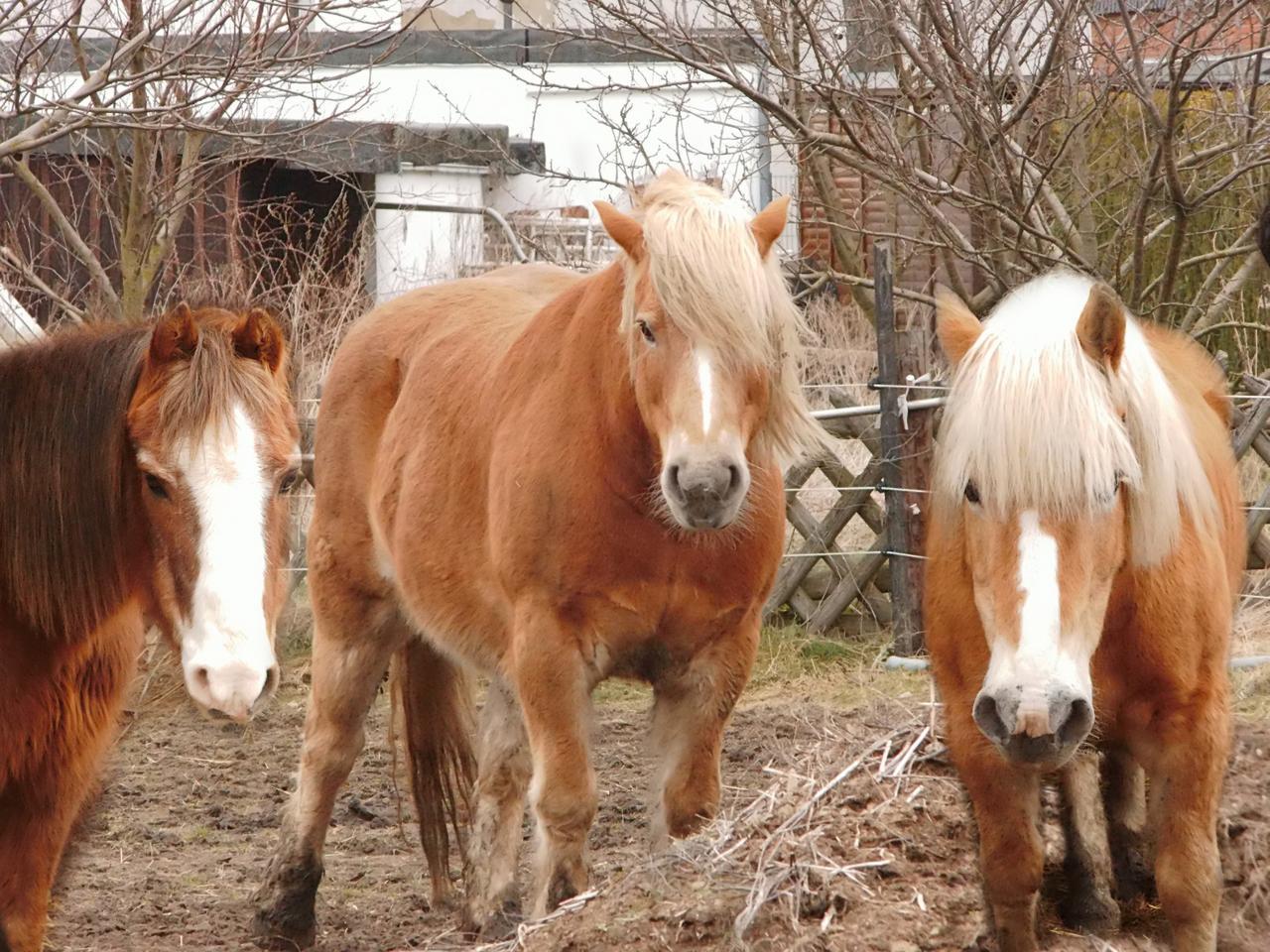 Hansi, Gorbi und Benny suchen neues Zuhause