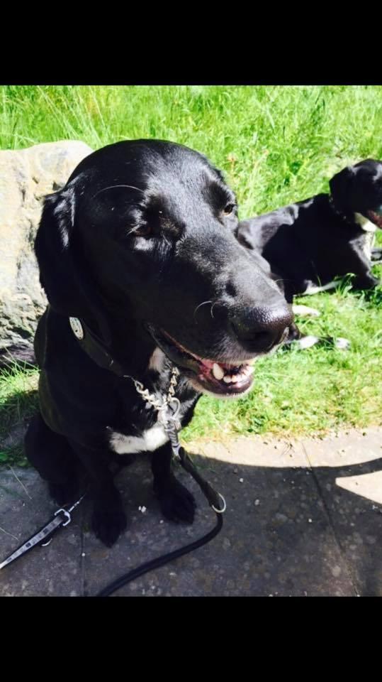 Hund Luca wird vermisst