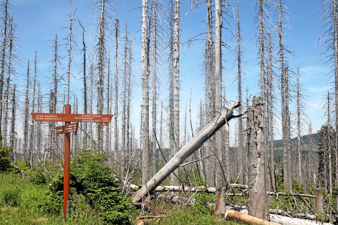 Waldbrandgefahr dramatisch gestiegen