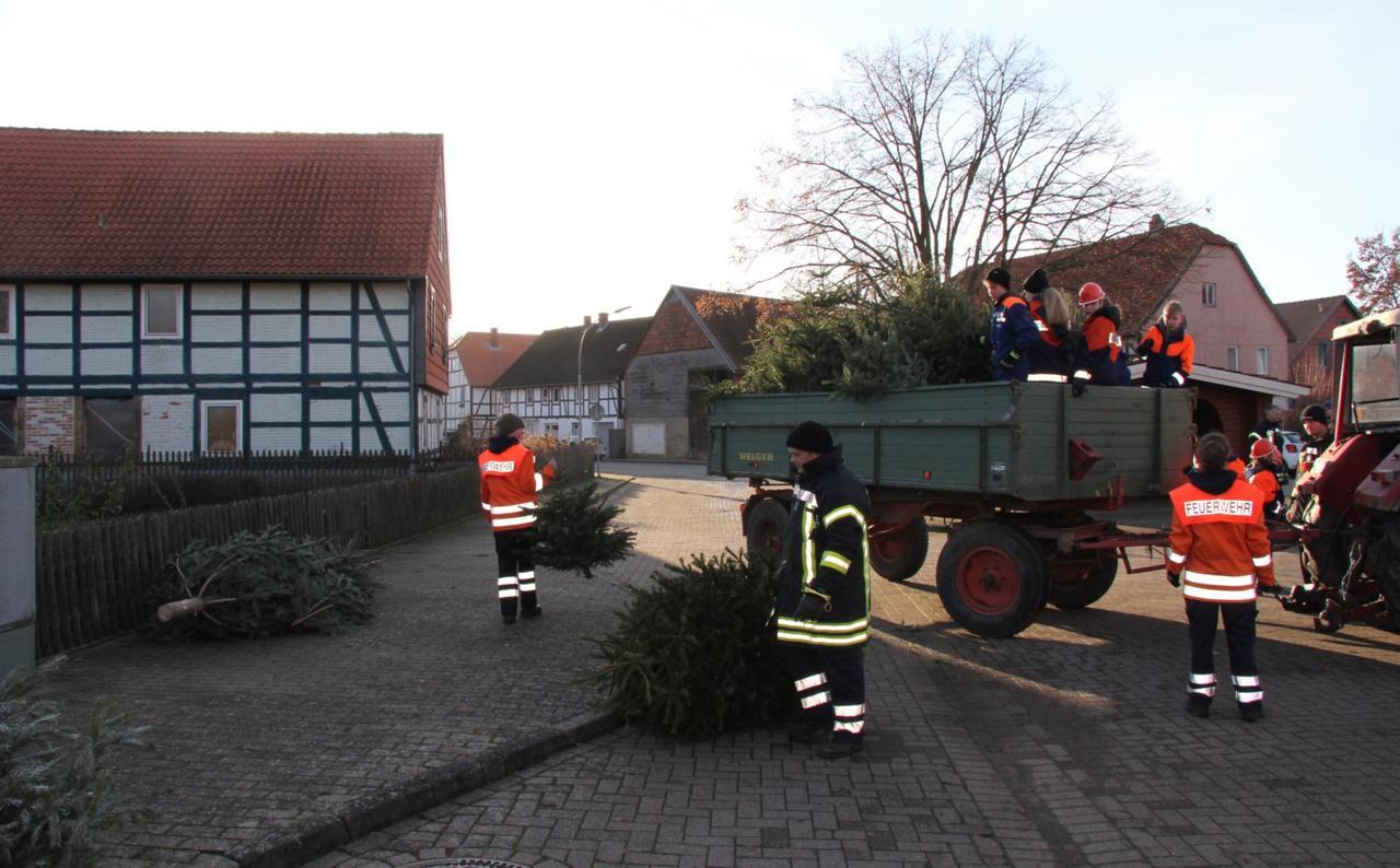 100 ausgediente Weihnachtsbäume gesammelt