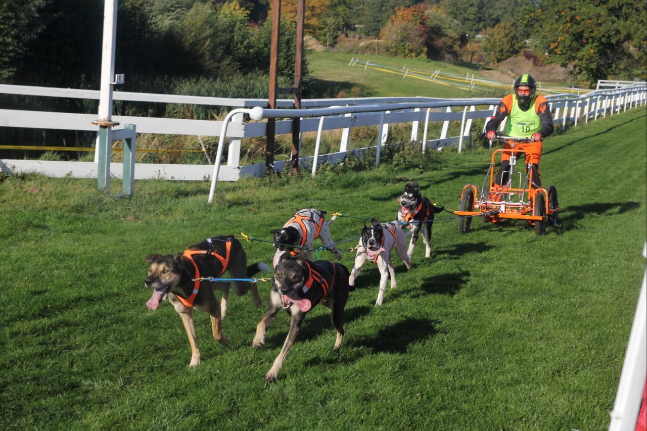 Schlittenhunde-Rennen auf der Rennbahn