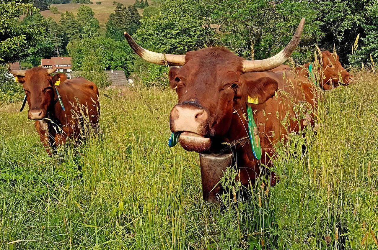 Kühe läuten auf dem Glockenberg