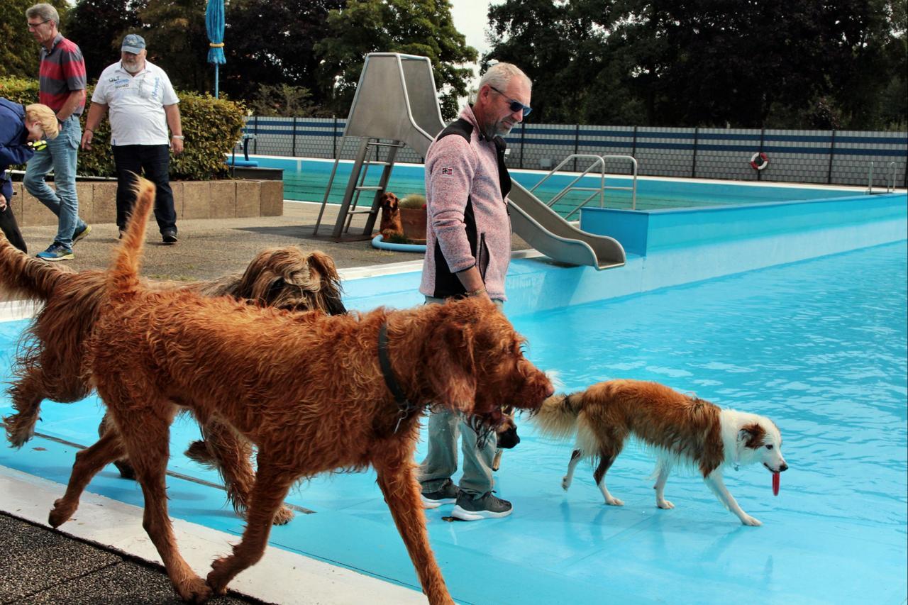 Hundeschwimmtag findet Anklang