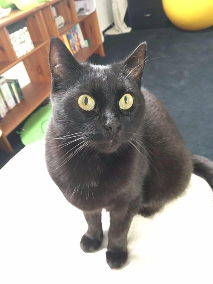 Feuerwehr findet vermisste Katze