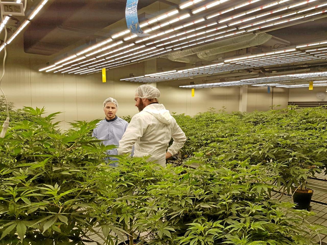 Eine Cannabis-Plantage als Geldanlage