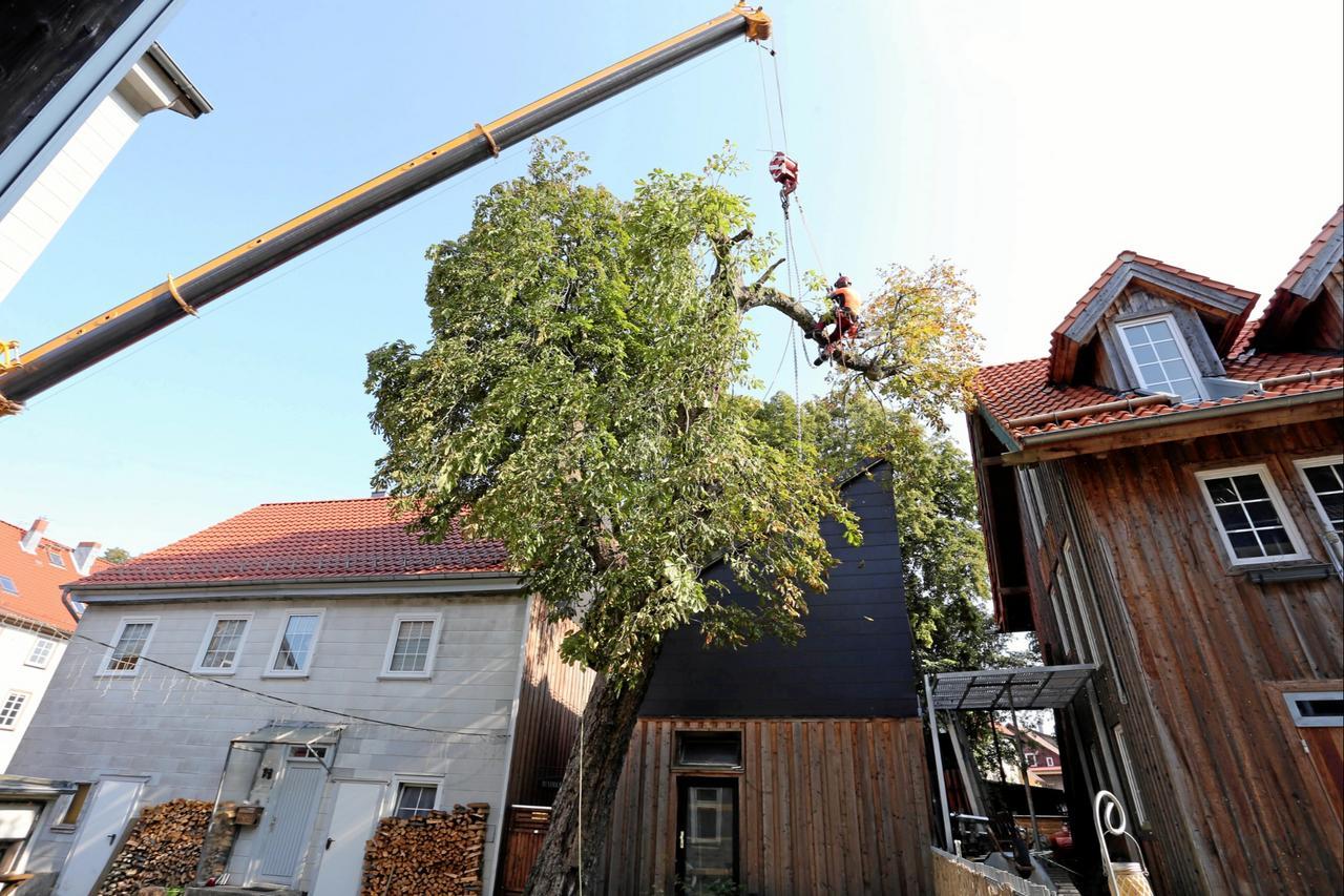 Baumfällung in der Burgstätter Straße