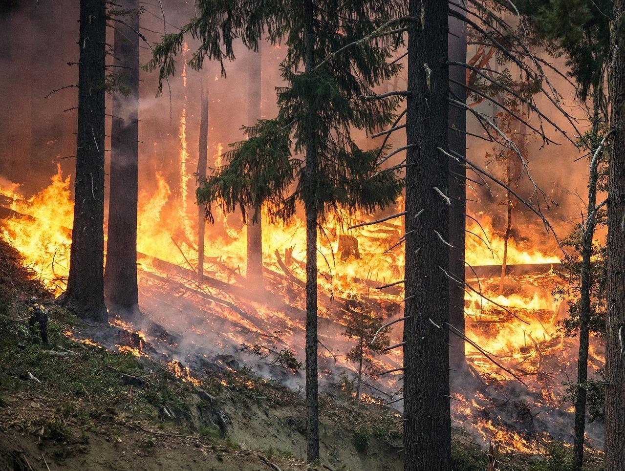Nationalpark warnt vor Waldbrandgefahr
