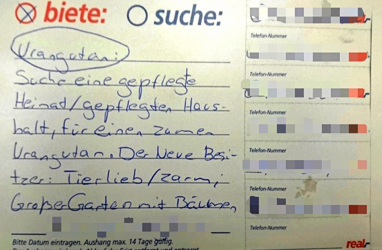Affiges Angebot Goslar Gz Live