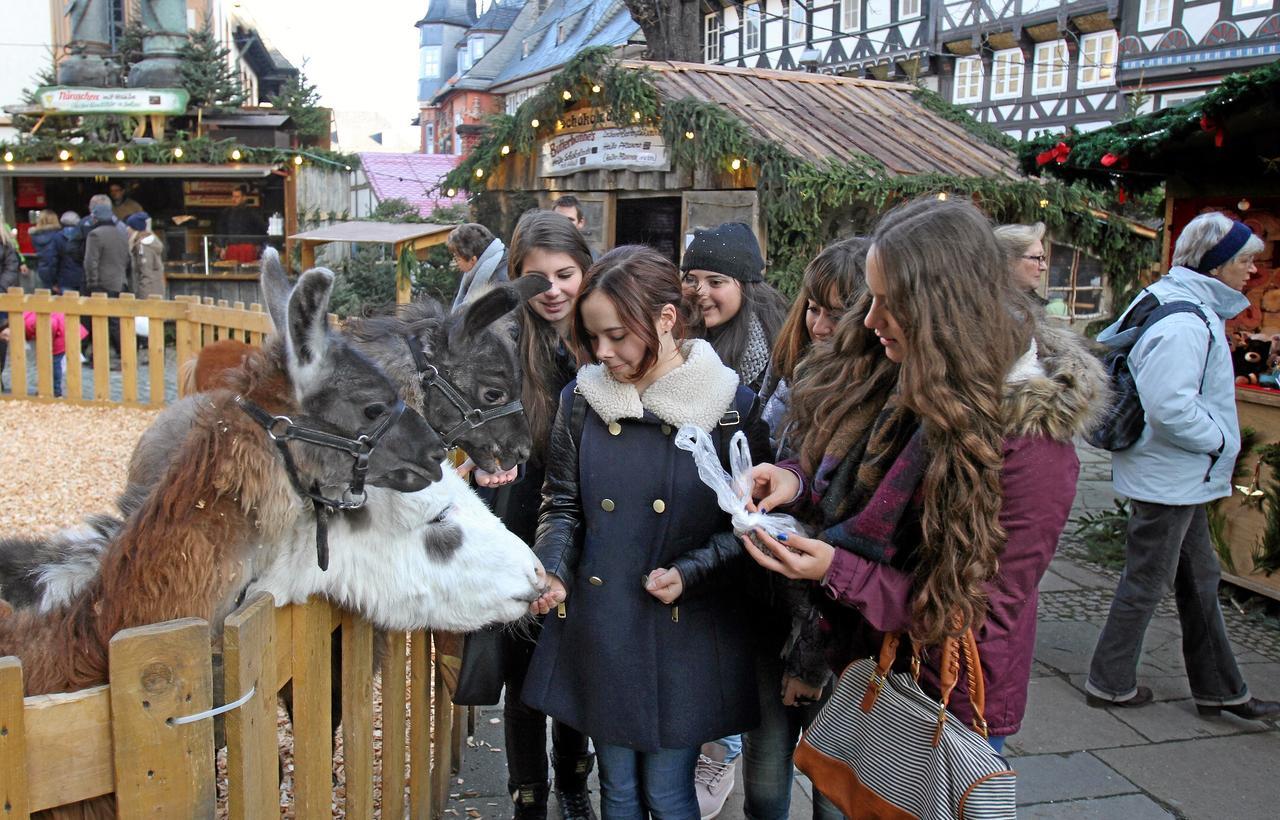 Tierisches vom Weihnachtsmarkt