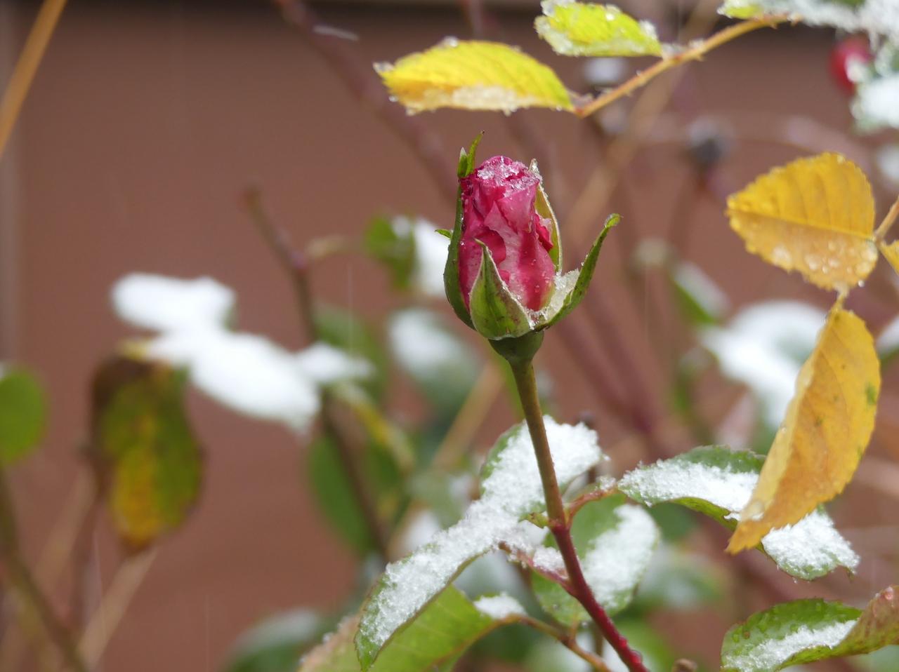Der erste Schnee verzaubert den Harz