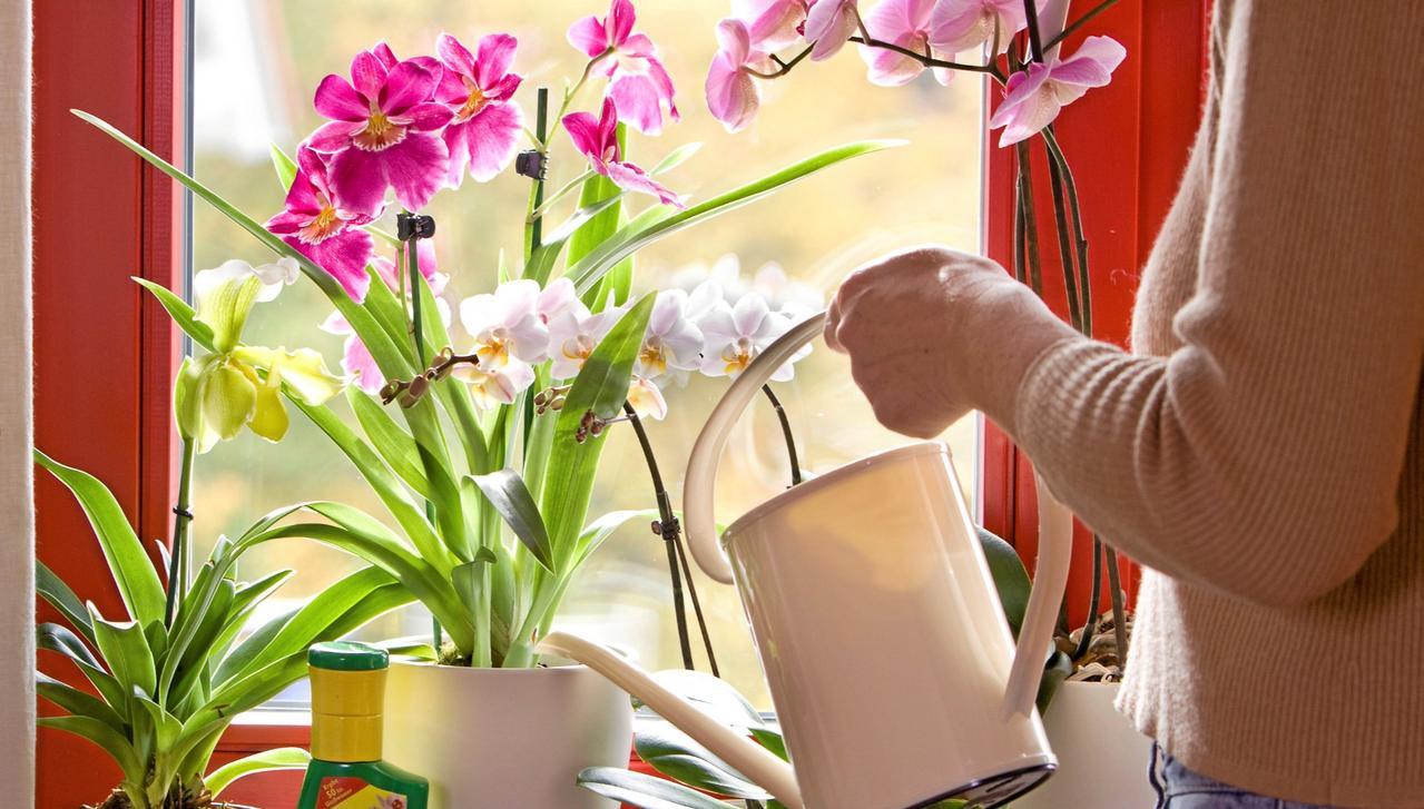 Erste Hilfe gegen Blütenfall und Läuse