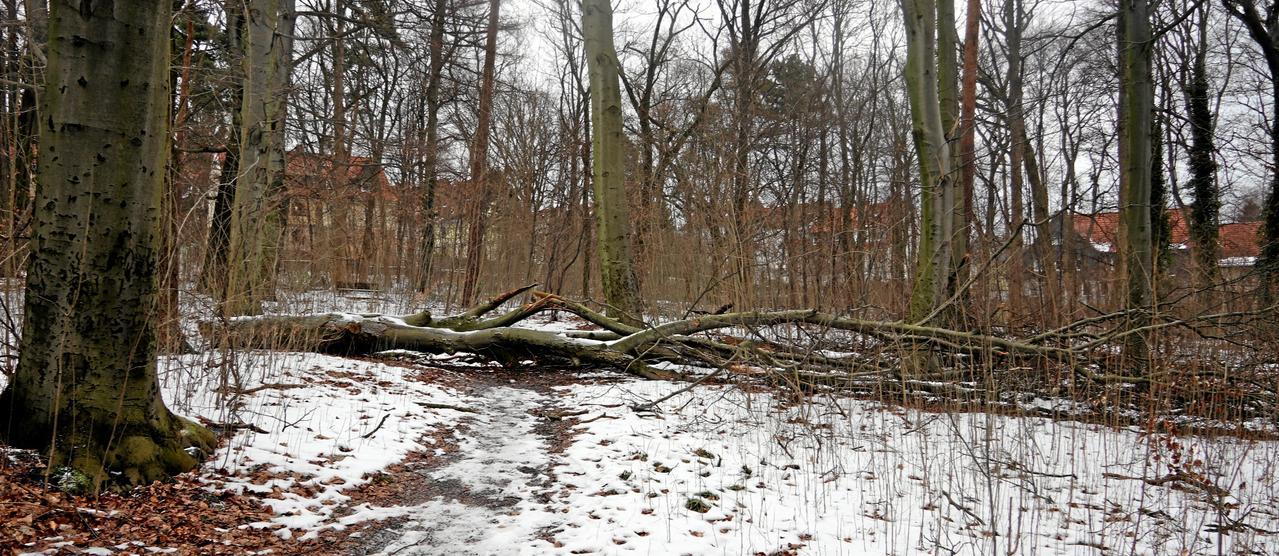 """Ein Baum liegt quer im """"Lebensraum"""""""
