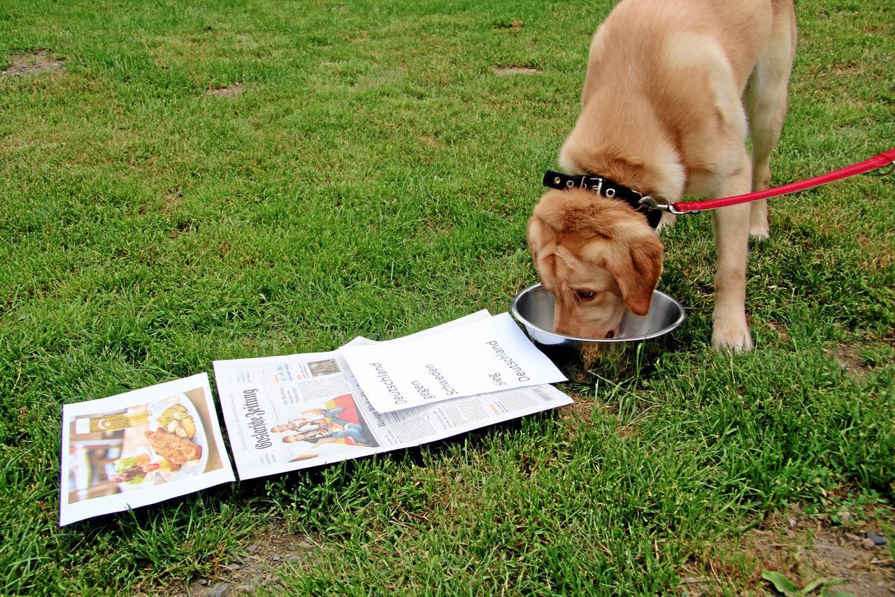 Beweist der Labrador einen guten Riecher?