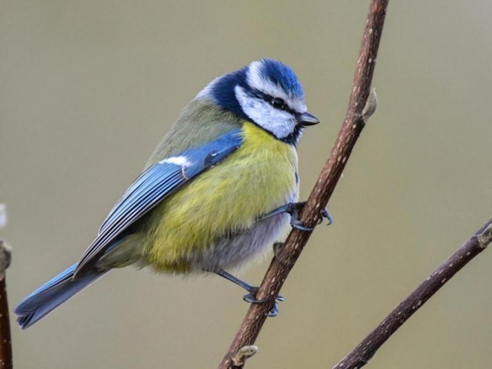 Nabu ruft zu Vogelzählung auf