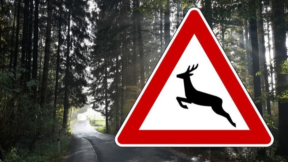 Wildunfall: 1500 Euro Schaden