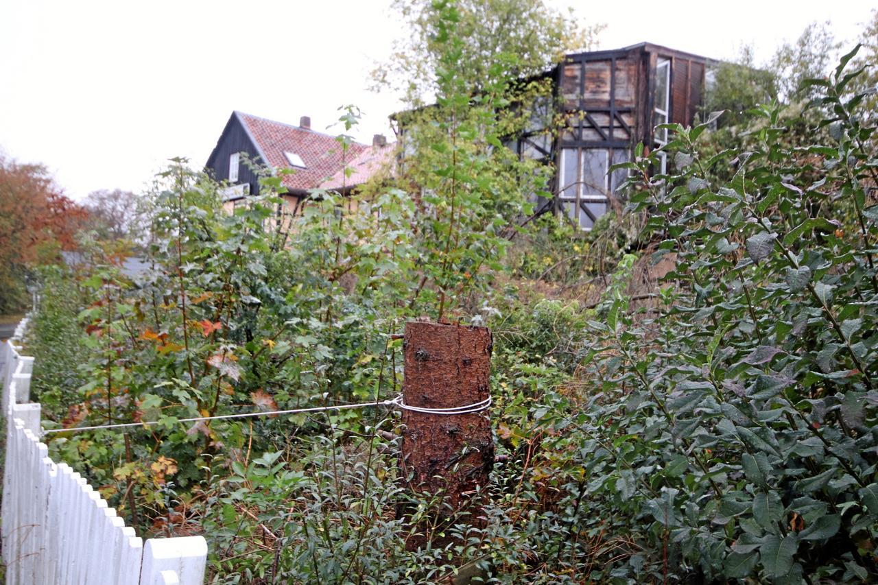 Stadt darf Bäume auf Privatgrund fällen