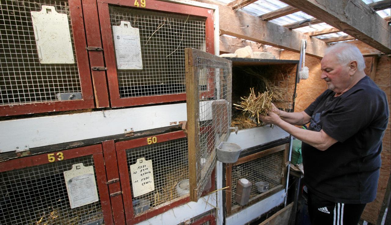 Kaninchenzuchtverein hat keine Züchter mehr