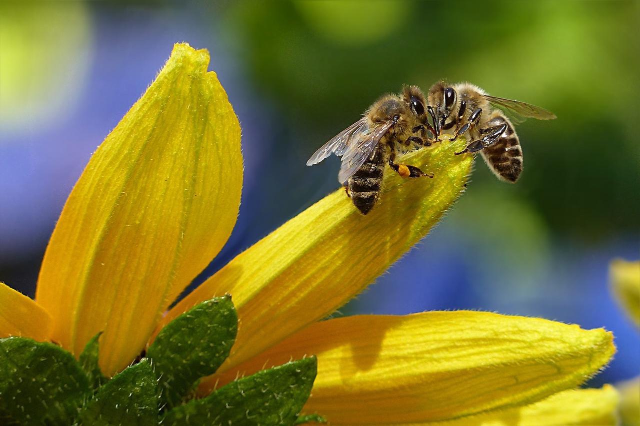 300 Bienenpflanzen können abgeholt werden