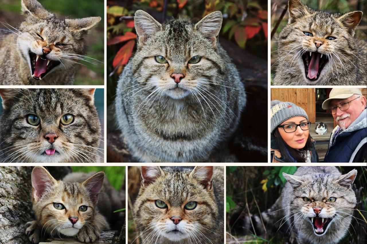 Harzburger Wildkatzengehege wird drei Jahre