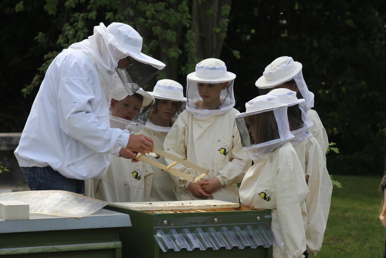 Imker-AG in Harlingerode hat wieder Bienen