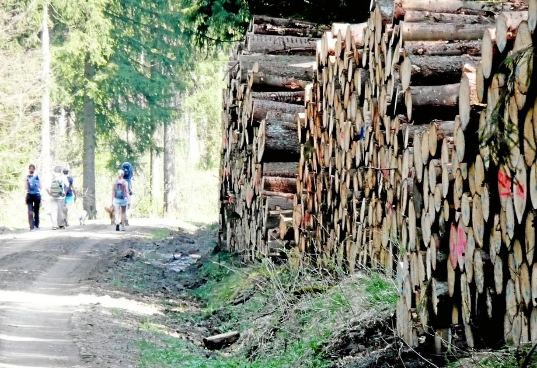 Diebe stehlen Fichtenstämme aus Holzpolter