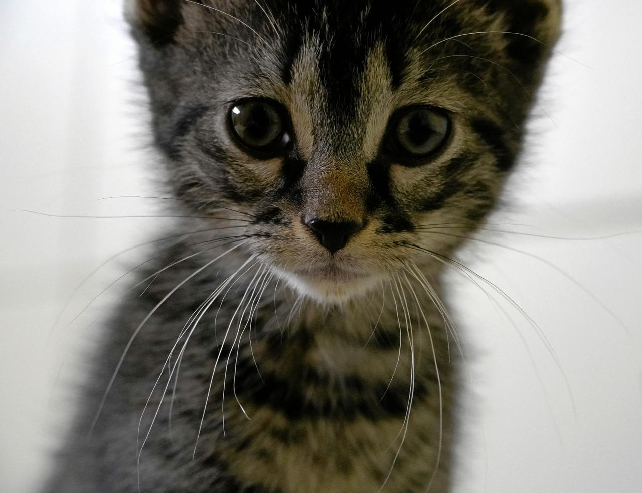 Immer mehr kranke Katzenbabys