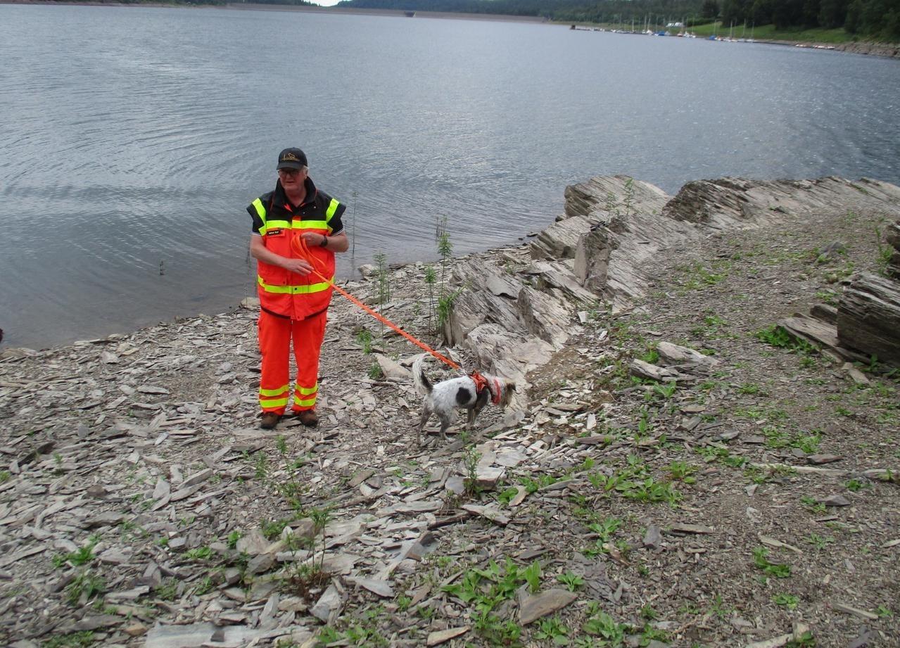 Hunde zeigen menschliche Spur an