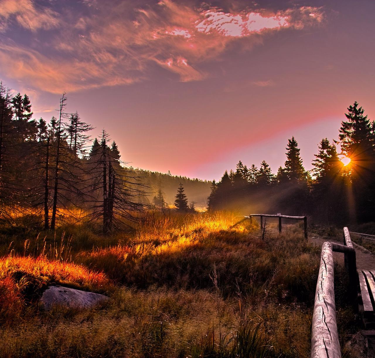 Beliebter Harz