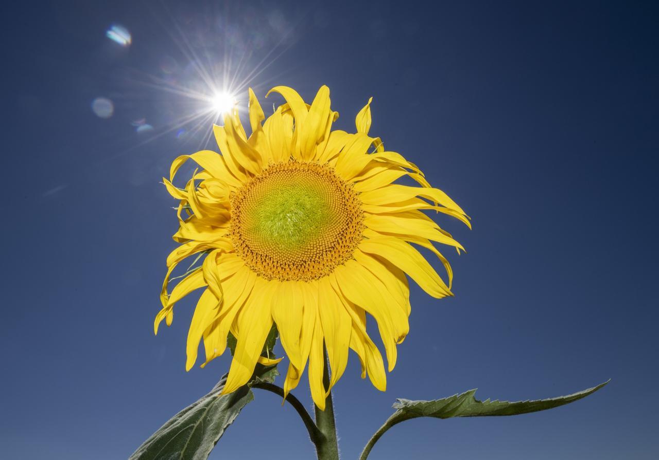 Sonne und bis zu 29 Grad