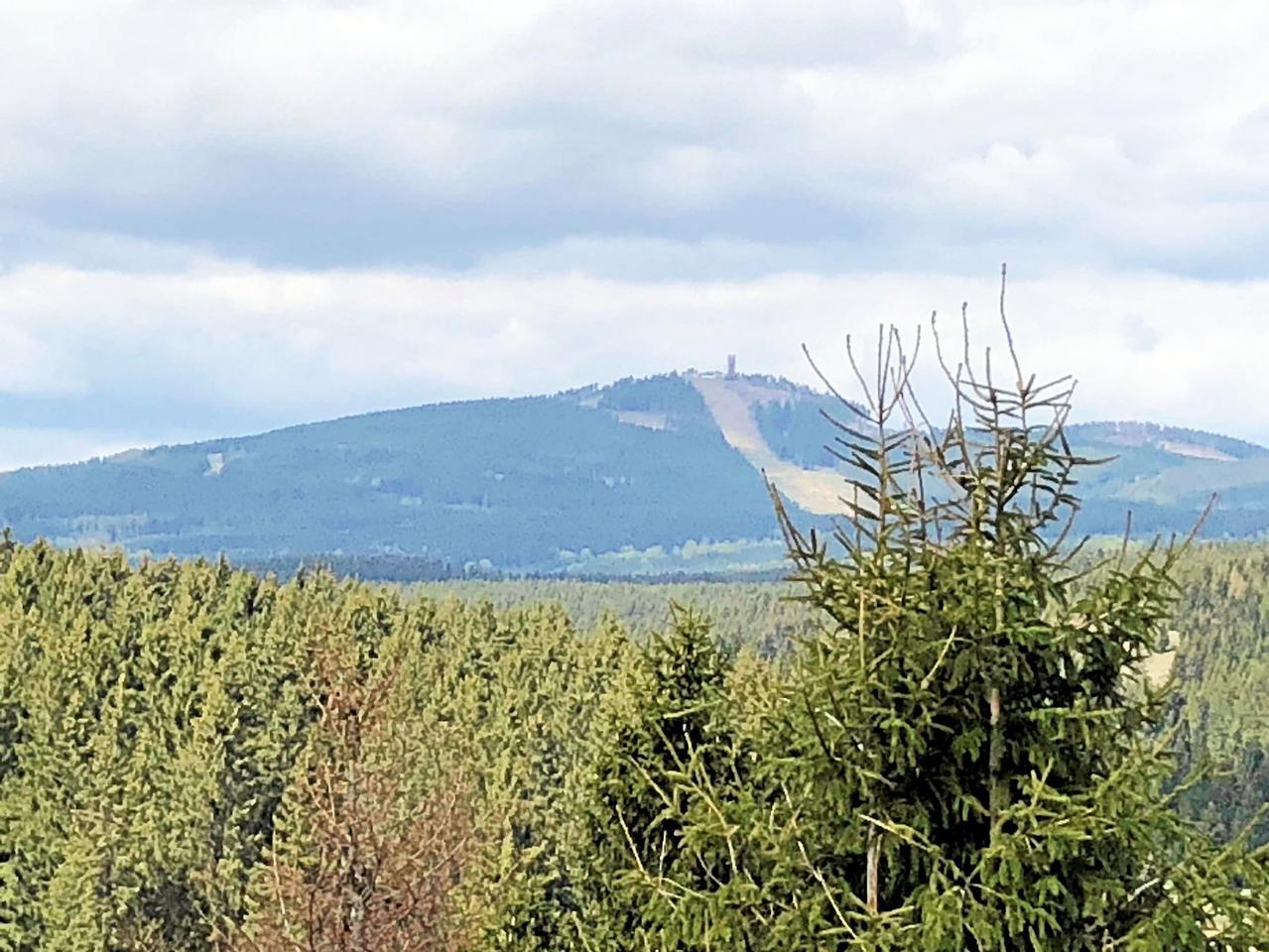 Kahlschlag am Wurmberg gegen Borkenkäfer