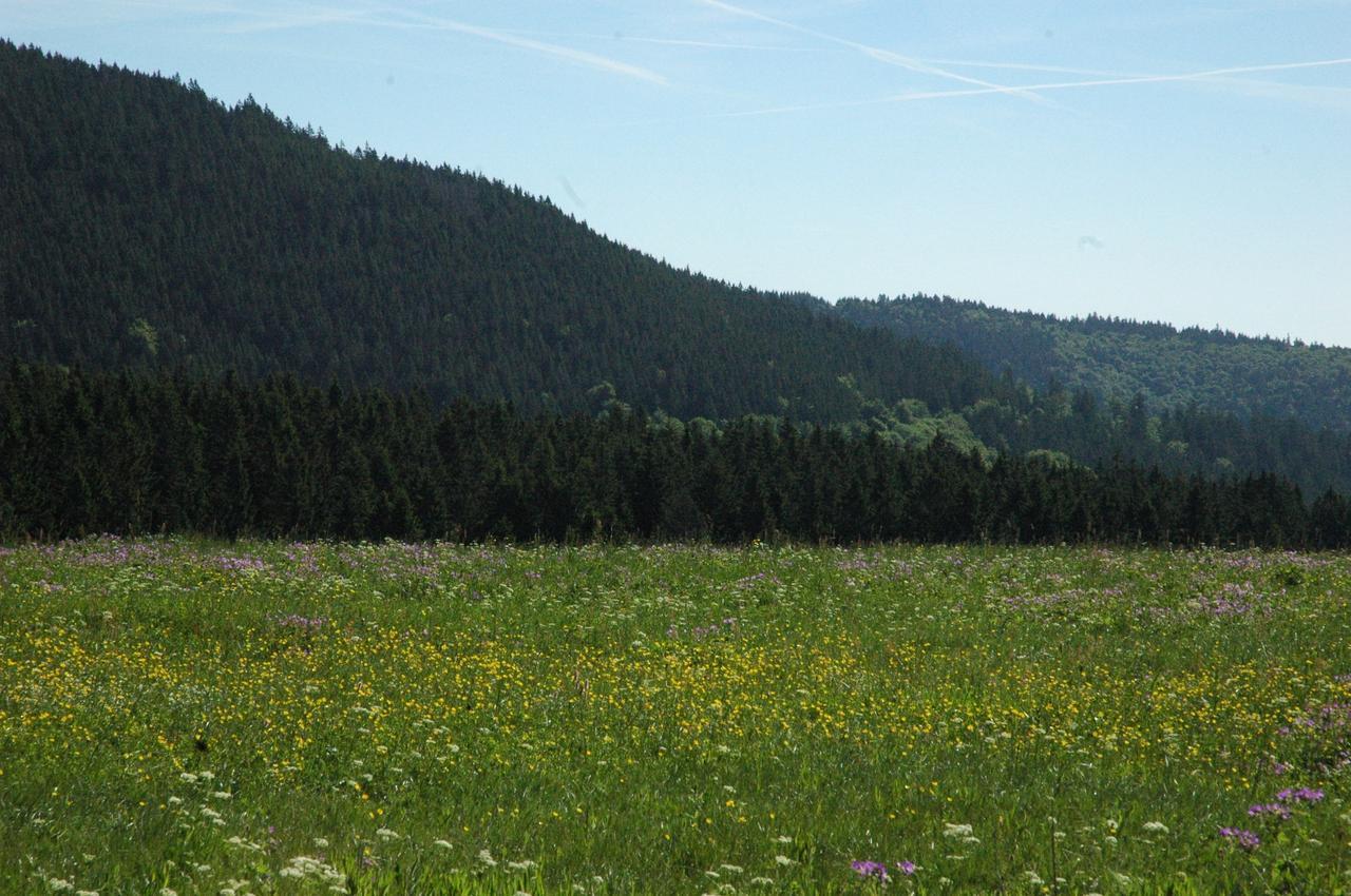 Kräuter-Exkursion über die Bergwiesen