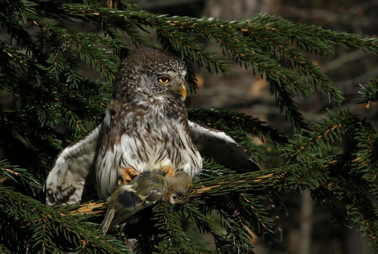 Seltene Vögel