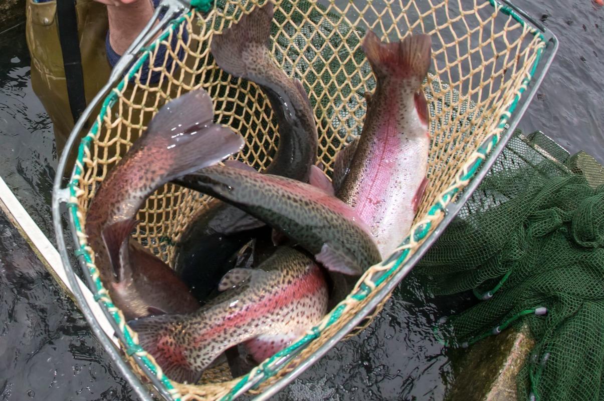 50 Kilo Fisch gestohlen