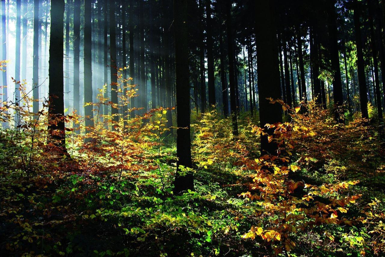Vortrag über die Waldwirtschaft