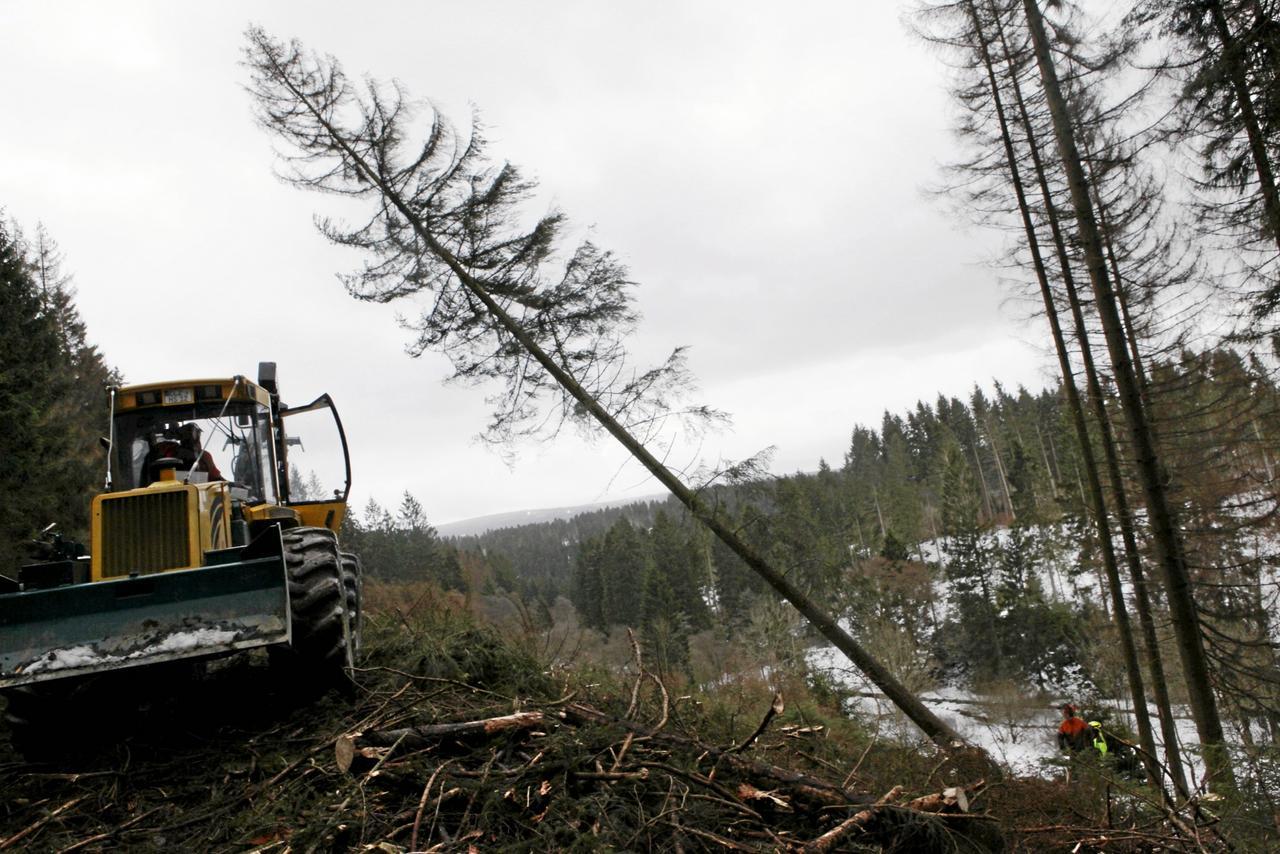Landesforsten fällen rund 1000 Käferbäume