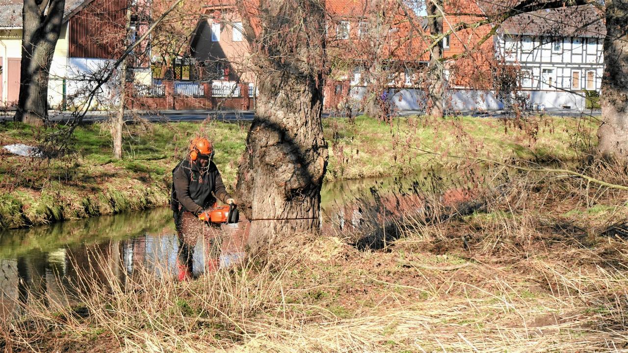 An der Nette fallen Bäume