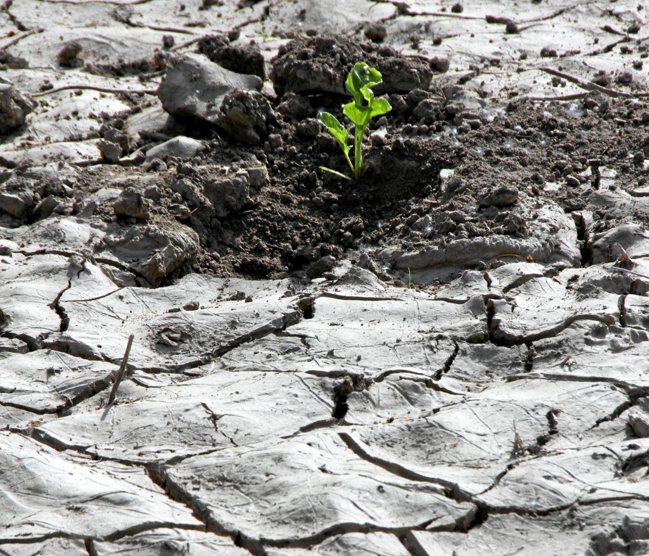Erst Überflutungen, dann Dürre