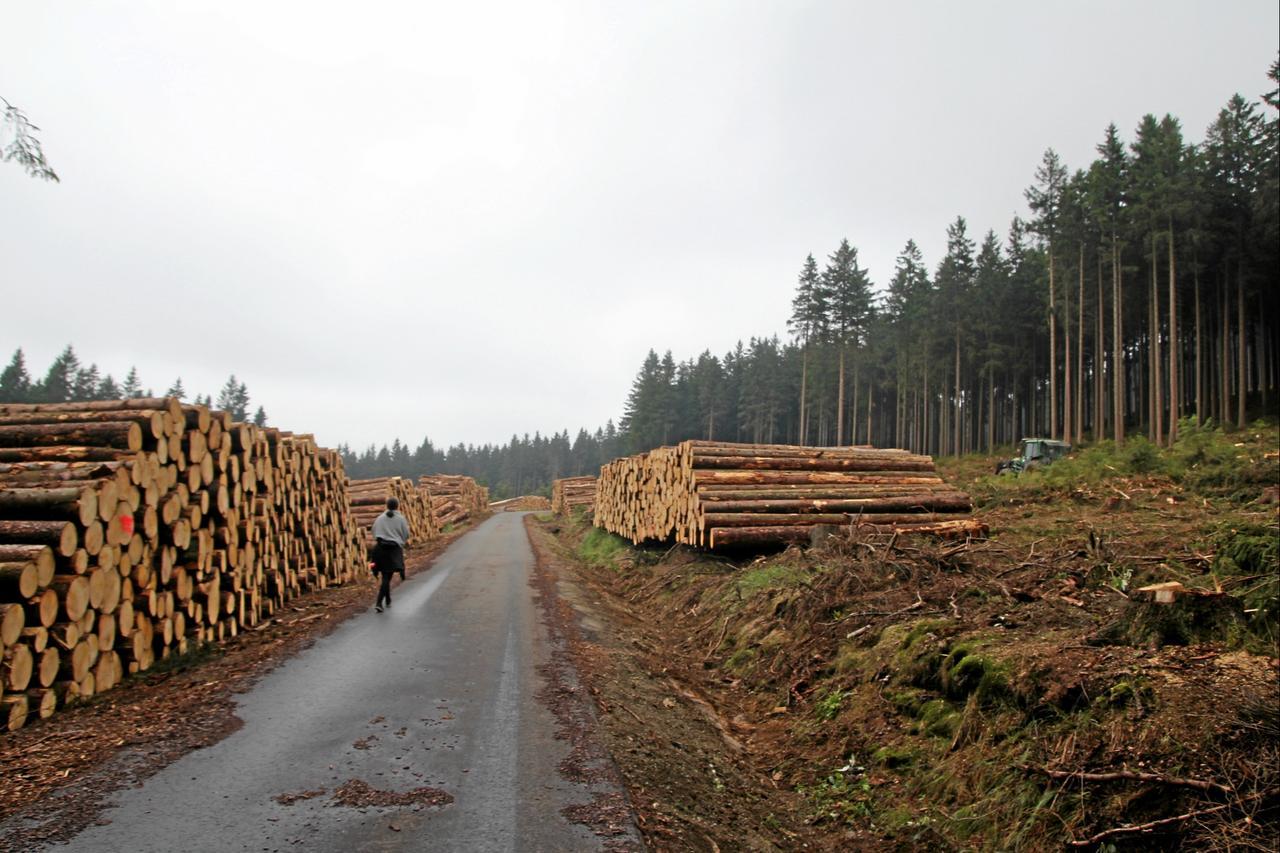 Holzpreis ist im Keller