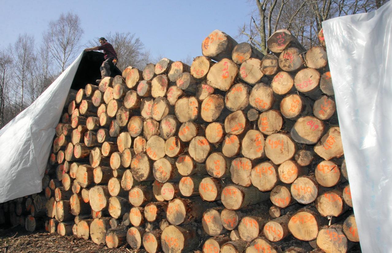 Verhüllungsaktion im Wald