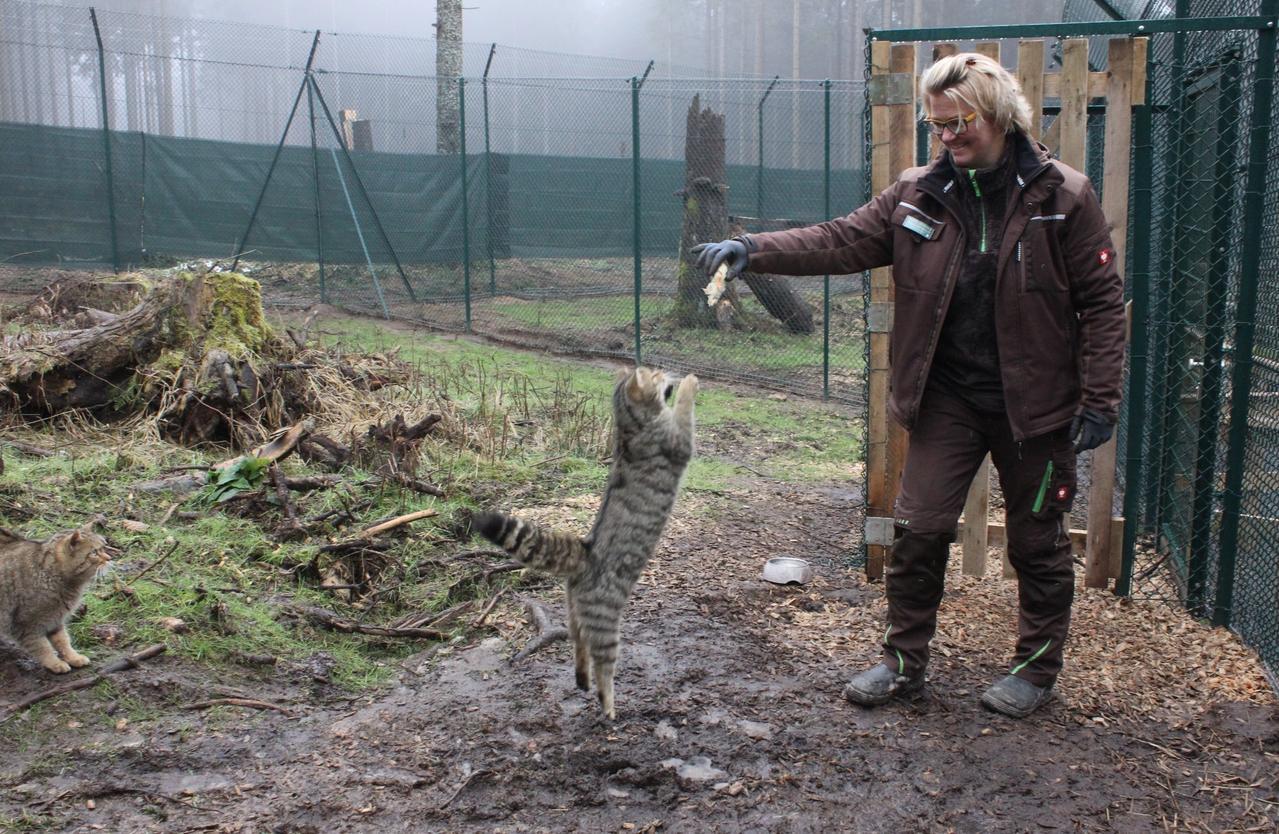 Wildkatzen warten auf Namen