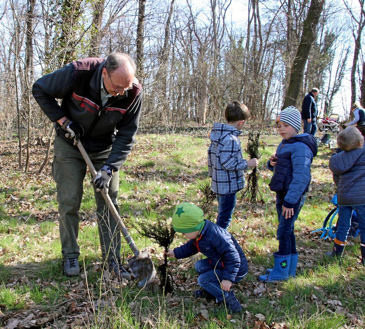 Kinder pflanzen 400 Eiben auf dem Iberg