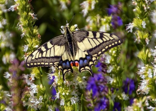 Kleinod seltener Pflanzen und Tiere