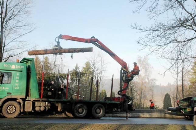 Holitschke kritisiert Fällen der Bäume