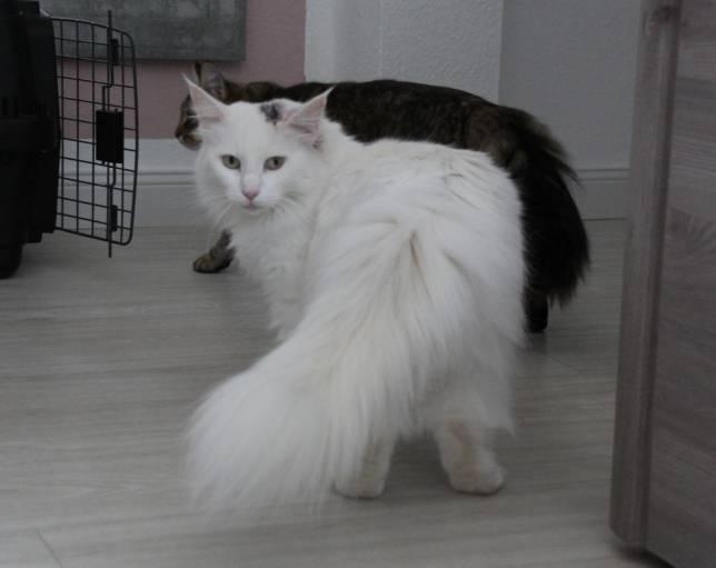 """Katze """"Nuri"""" von Unbekanntem angeschossen"""