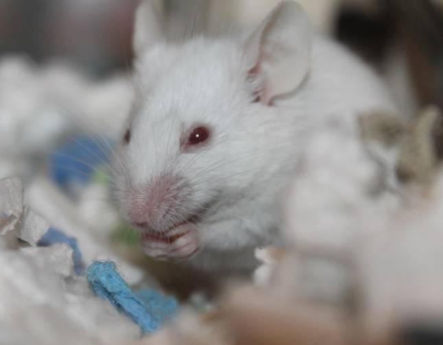 Schlangenfarm: Mäuse und Ratten gestohlen