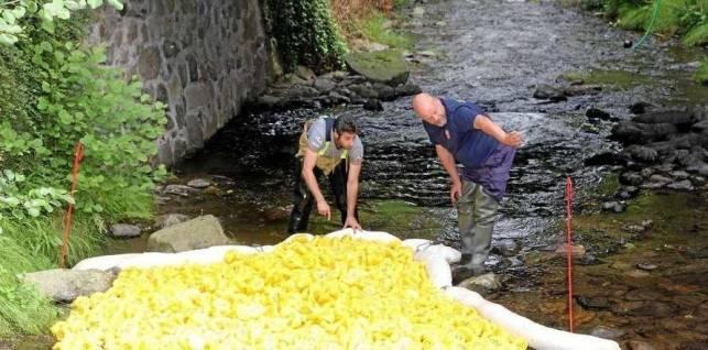 Morgen schwimmen gelbe Enten um die Wette