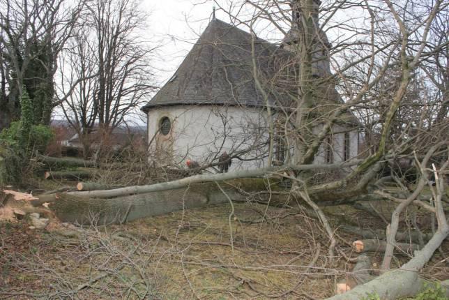 Bäume fallen für den Denkmalschutz