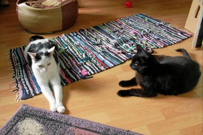 Ein Gnadenhof für Miezekatzen